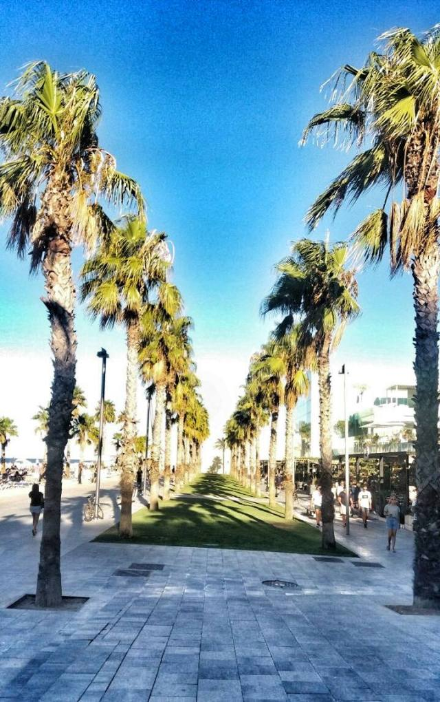 palmtrees-in-labarceloneta