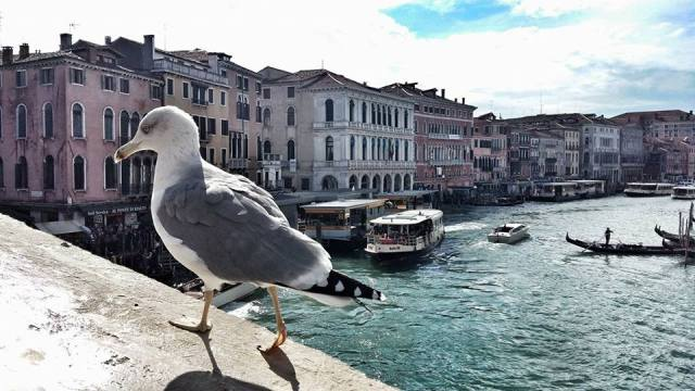 cute-bird-on-rialto-bridge