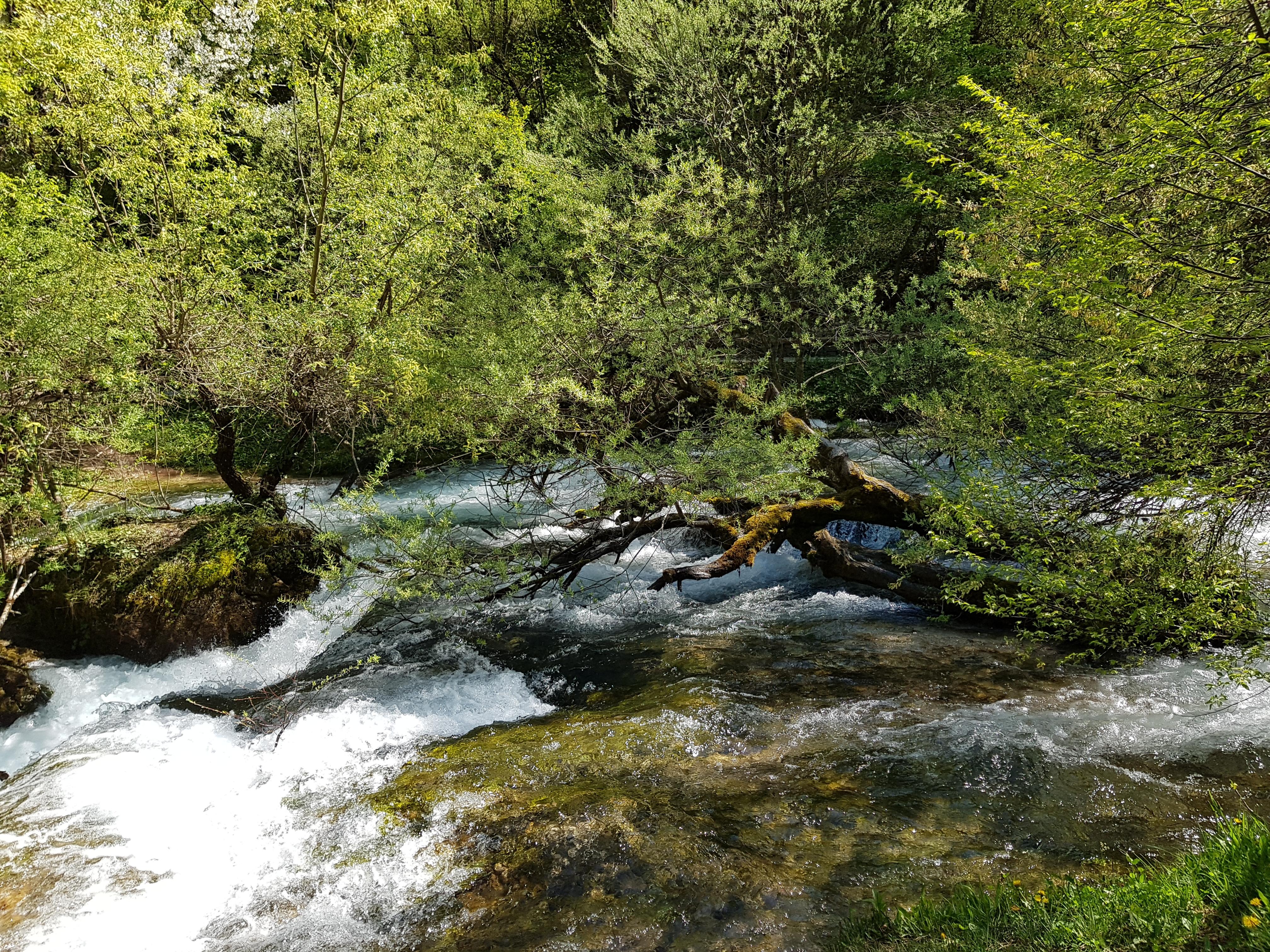 vevcani_nature