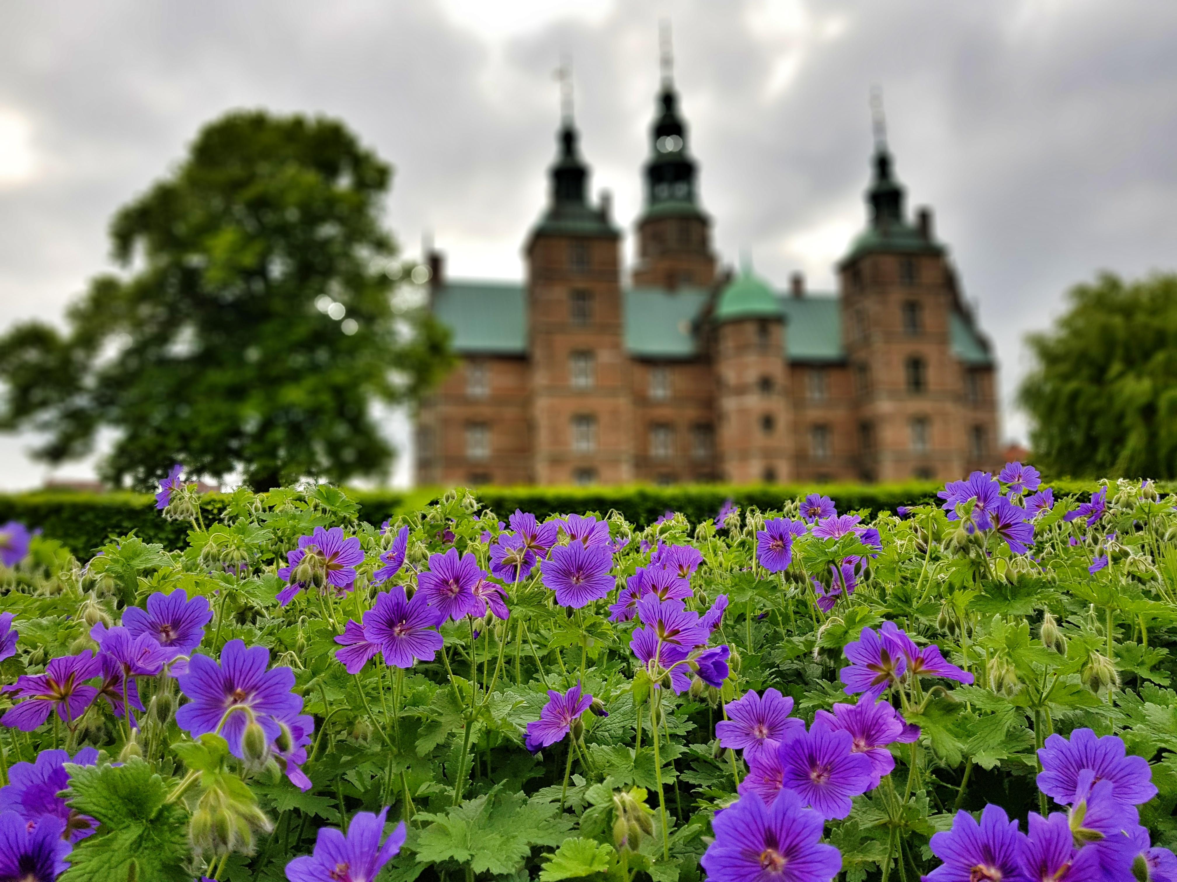 flowers_rosenborg_castle_gardens